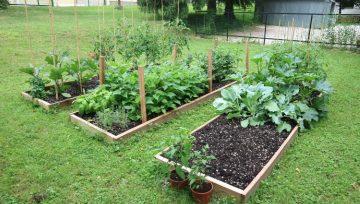 Kako je nastal mali urbani zelenjavni Vrt Obilja?