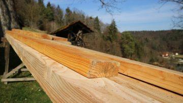 Les na vrtu in 4 najbolj odporne slovenske vrste