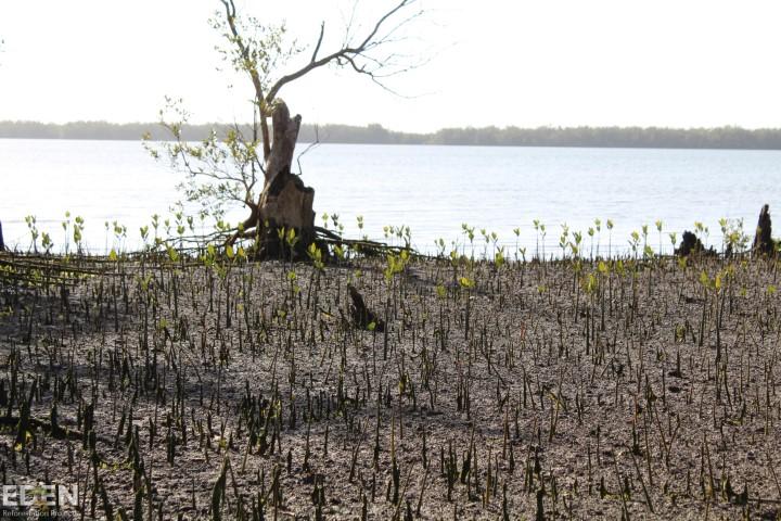 Pet dreves projekt madagaskar sajenje dreves