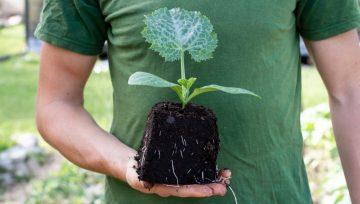 Substratniki in sadilne kocke - izkušnje po prvi sezoni