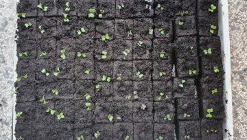 Kateri substratnik (sadilno kocko) uporabiti za posamezno zelenjavo?