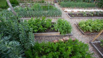 Malo bolj drzna sezona vrtnarjenja